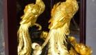chim phượng hoàng dát vàng 5