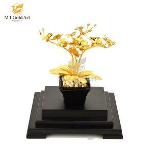 cây lan hồ điệp dát vàng 1
